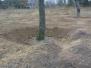 Verplanten bomen